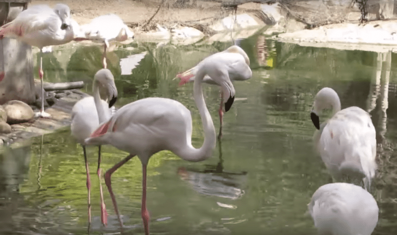 Vallée des oiseaux, Agadir