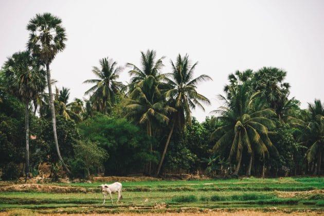 Les 9 choses incontournables à faire à Siem Reap