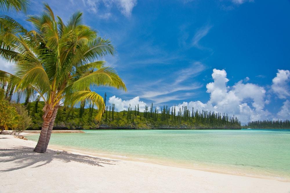 Palmier sur une plage tropicale, île des Pins, Nouvelle-Calédonie