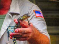 Parc des Everglades : excursion en hydroglisseur
