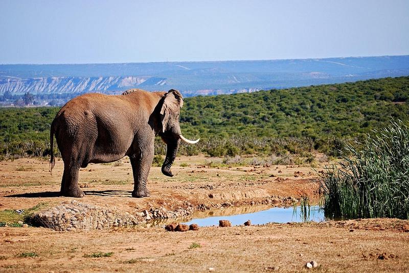 Addo Elephant Park, Port Elizabeth