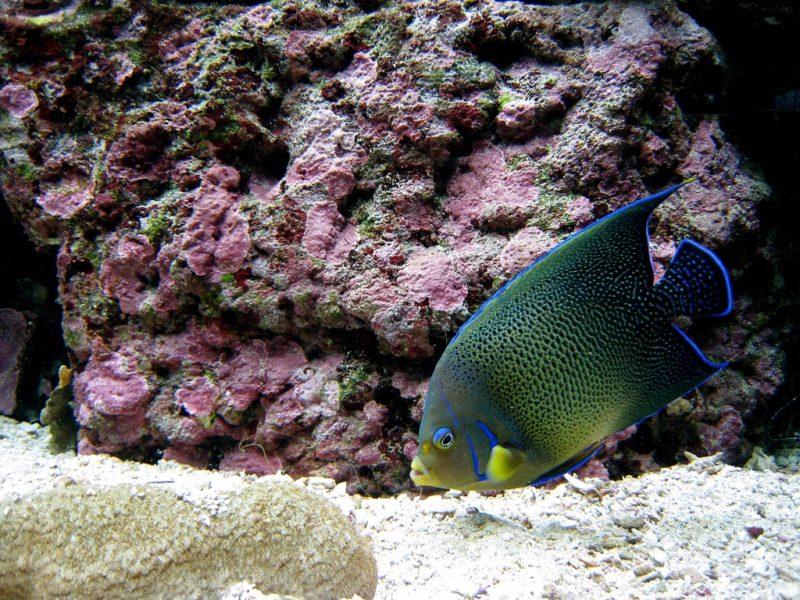 Aquarium des lagons, Nouméa, Nouvelle Calédonie