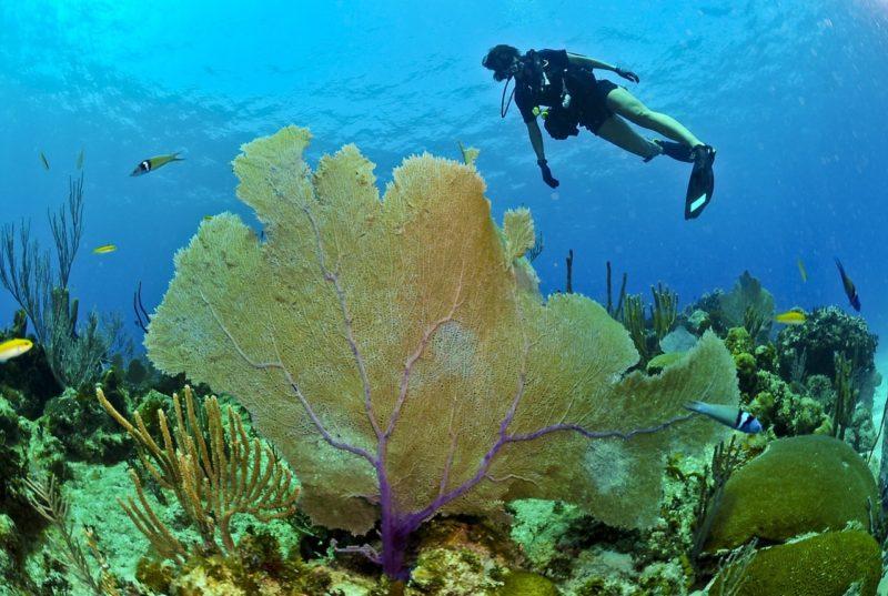 Plongée, Jamaïque
