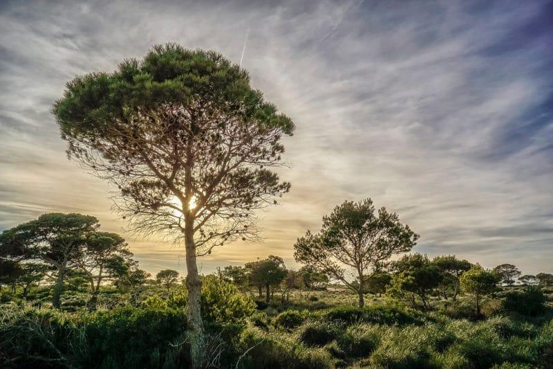 Forêt de Castanel, Oran