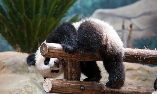 Où dormir près du Zoo de Beauval ?