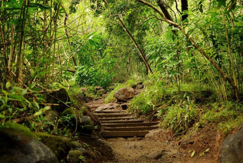 Mānoan, cascade, randonnée en forêt, Honolulu