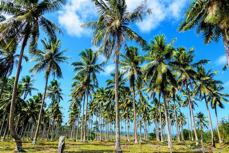 Île Maré, Nouvelle Calédonie