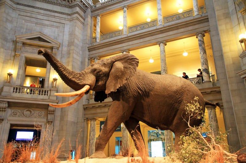 Musée d'Histoire naturelle, Washington
