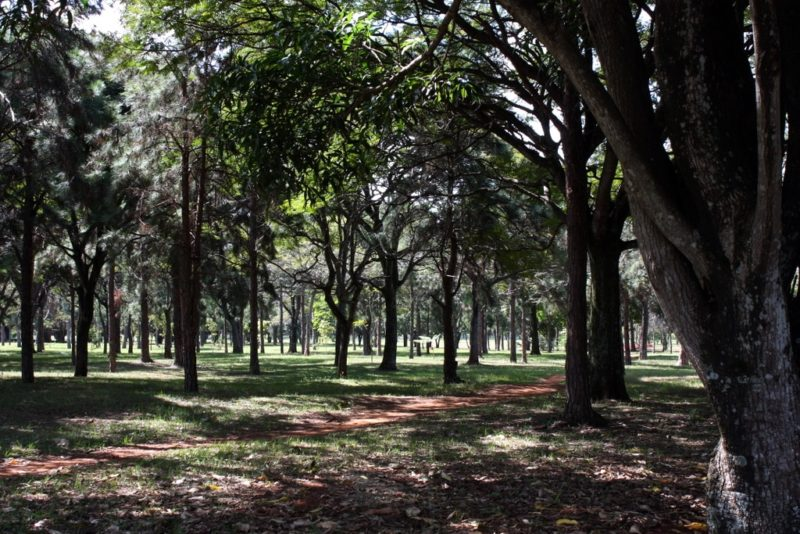 Parque da Cidade de Brasília Sarah Kubitschek, Brasilia