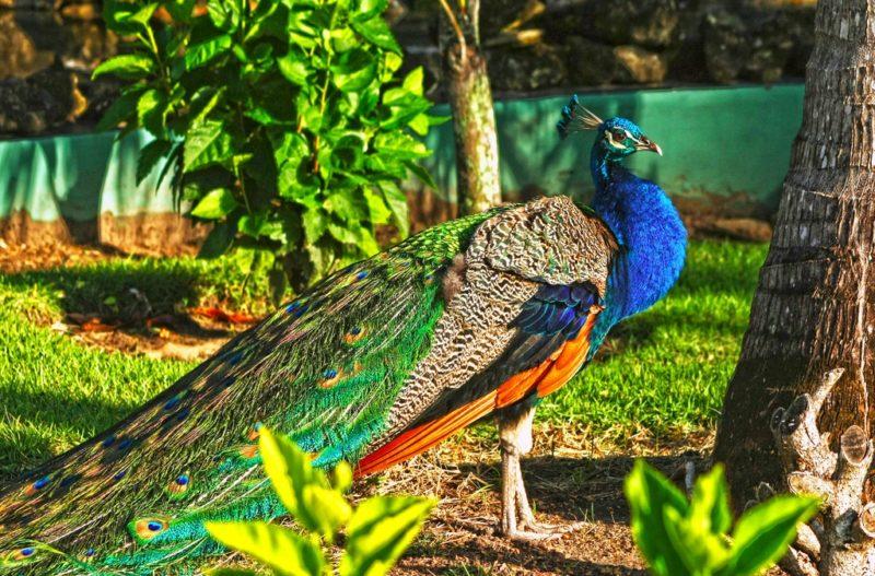 Réserve animale, Punta Cana