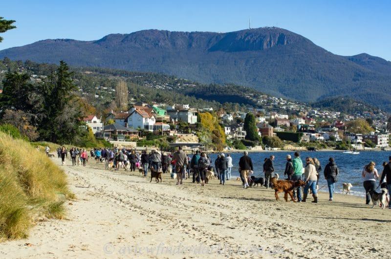 Sandy Bay, Hobart