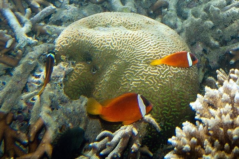 Plongée, Snorkeling, Fidji
