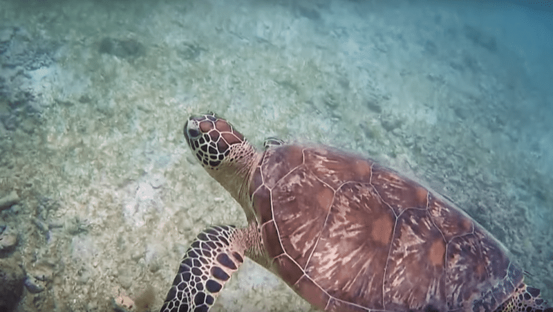 Tortue, snorkeling, Mayotte