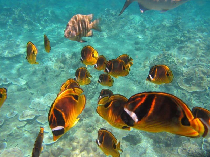 Snorkeling, Nouvelle-Calédonie