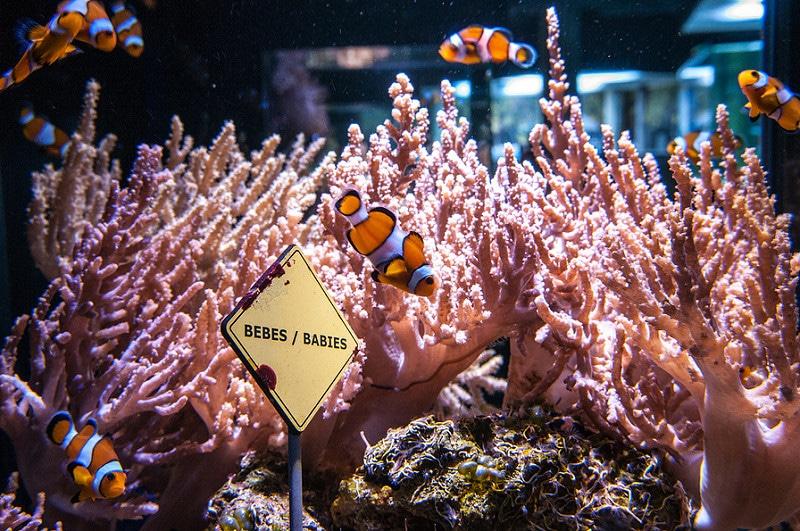 Aquarium Nausicaà, Boulogne-sur-Mer