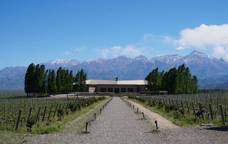 Vignoble, Mendoza