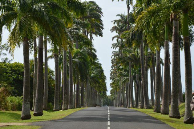 Louer une voiture en Guadeloupe pendant vos vacances est-il nécessaire ?