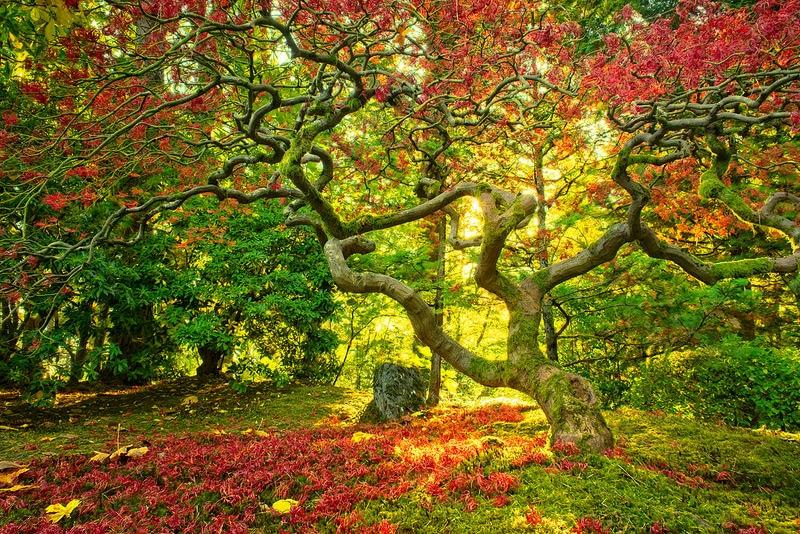 Jardin japonais de Portland