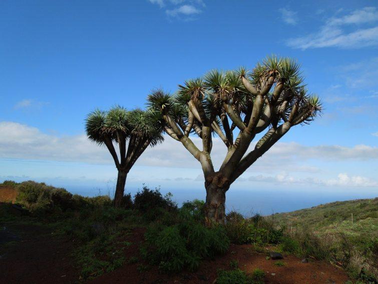 La Palma, Gran Canaria