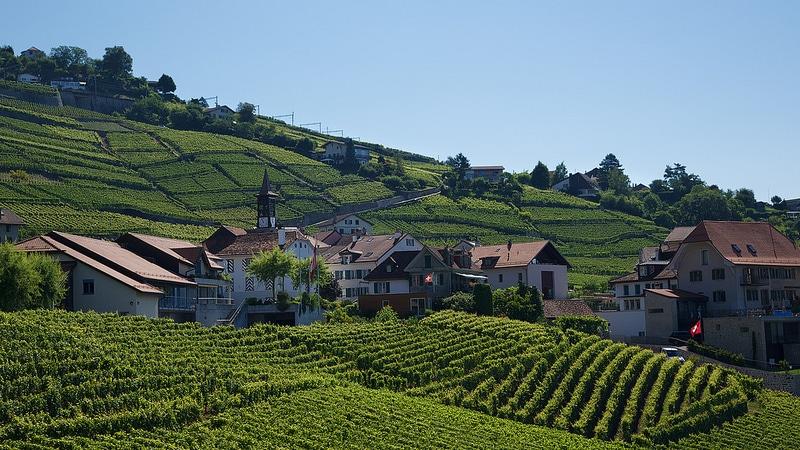 Vignobles de Lavaux, Lausanne