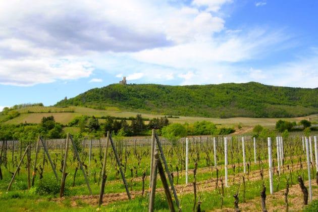 Dans quelle ville loger pour faire la route des vins d'Alsace ?