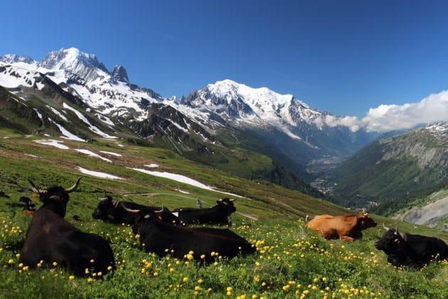 Visiter le Mont-Blanc lors d'un séjour à Chamonix
