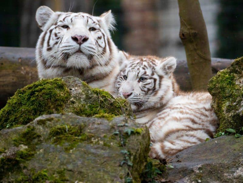 Que voir et que faire au Zoo de Beauval