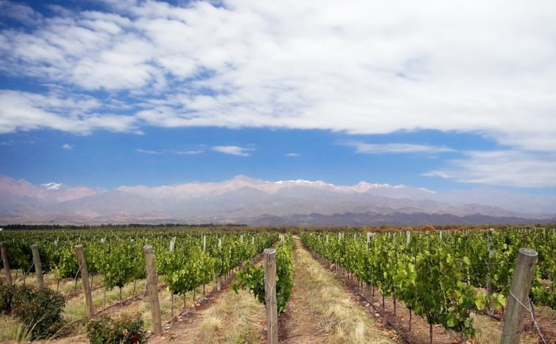 Vignoble à Uco Valley, Mendoza