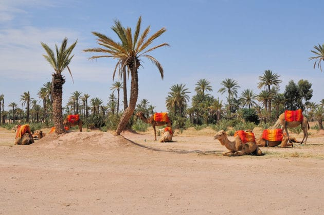 Visiter la Palmeraie de Marrakech : billets, tarifs, horaires