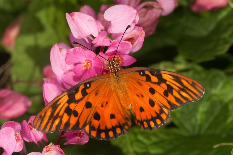 Ferme des papillons à Saint Martin