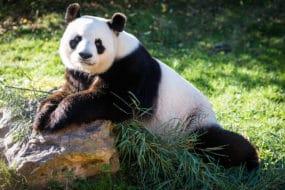Visiter le Zoo de Beauval : billets, tarifs, horaires