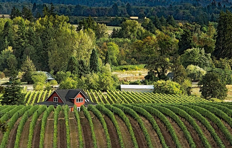 Vignoble, Willamette Valley, Portland