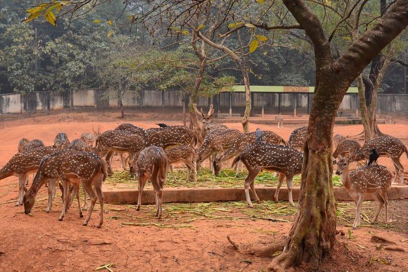 Zoo national du Bangladesh, Dacca