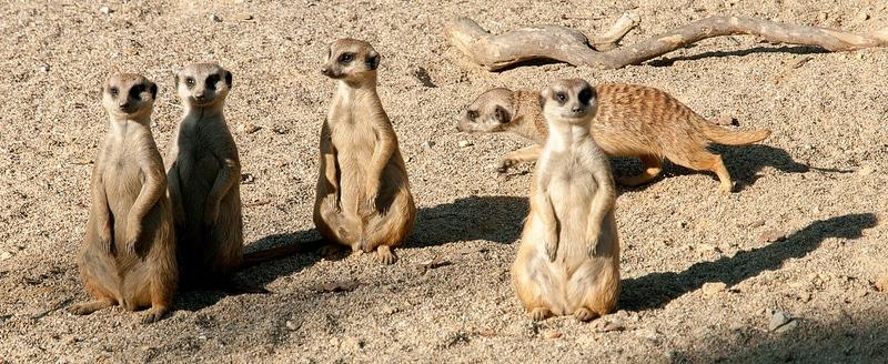 Zoo de Lubljana