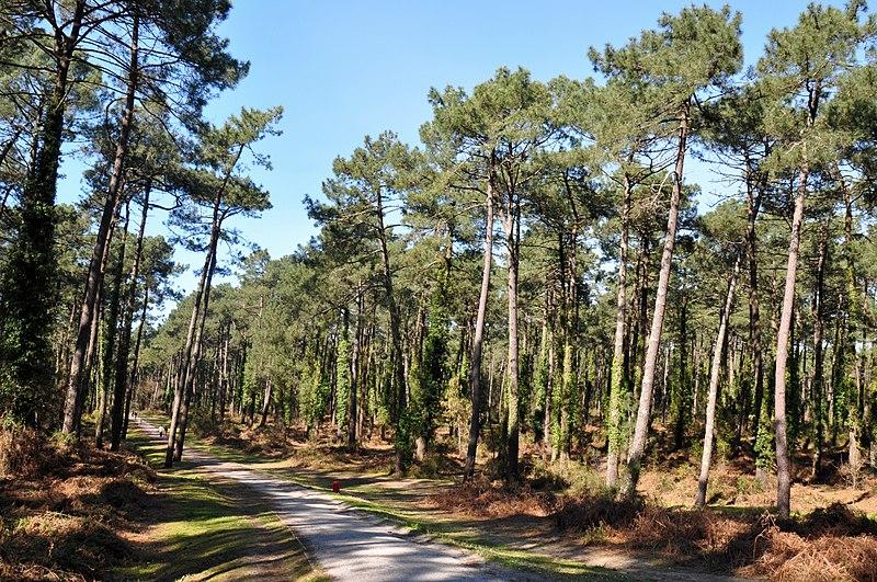 Forêt du Pignada