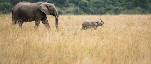 Partez à la découverte du Kenya (avril/mai) 🦒🦓