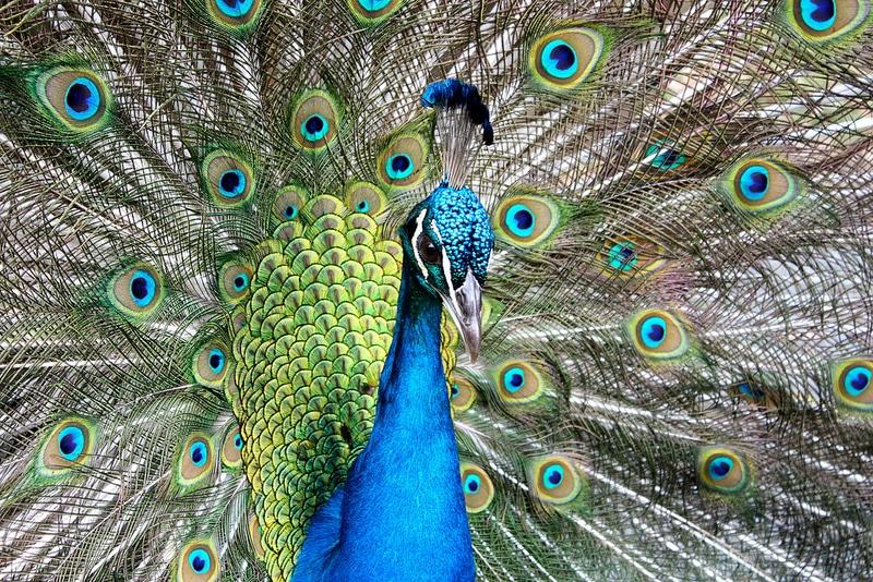 Parc zoologique et forestier Michel Corbasson, Nouméa