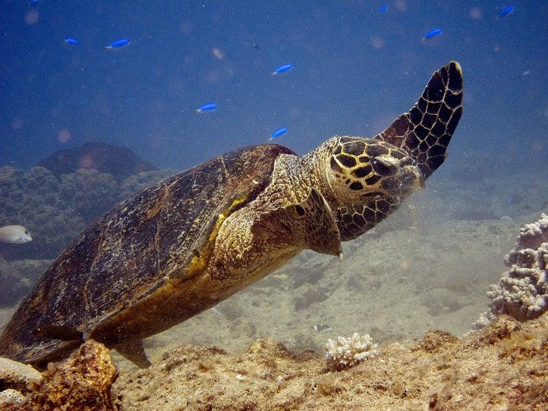 Plongée et snorkeling à Nouméa, Nouvelle-Calédonie