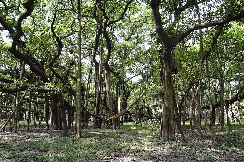 Jardin botanique indien