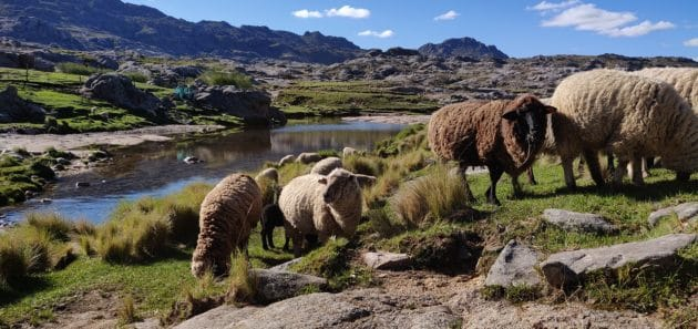 Les 9 choses incontournables à faire à Córdoba