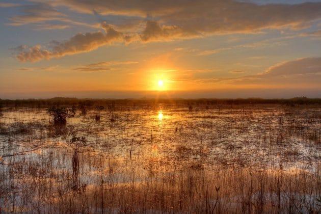Visiter les Everglades depuis Miami : billets, tarifs, horaires