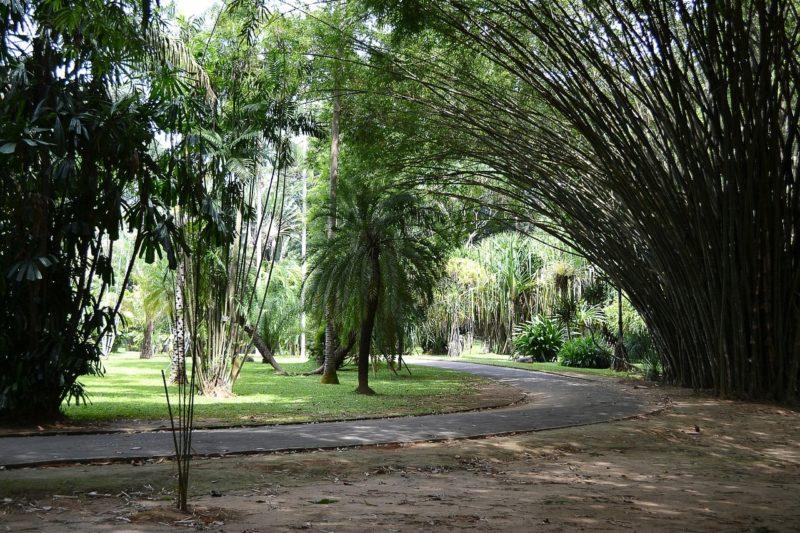 Peradeniya Gardens, Kandy, Sri Lanka