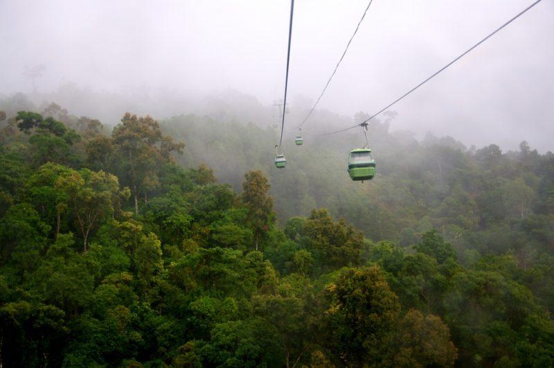 Cairns et la rainforest