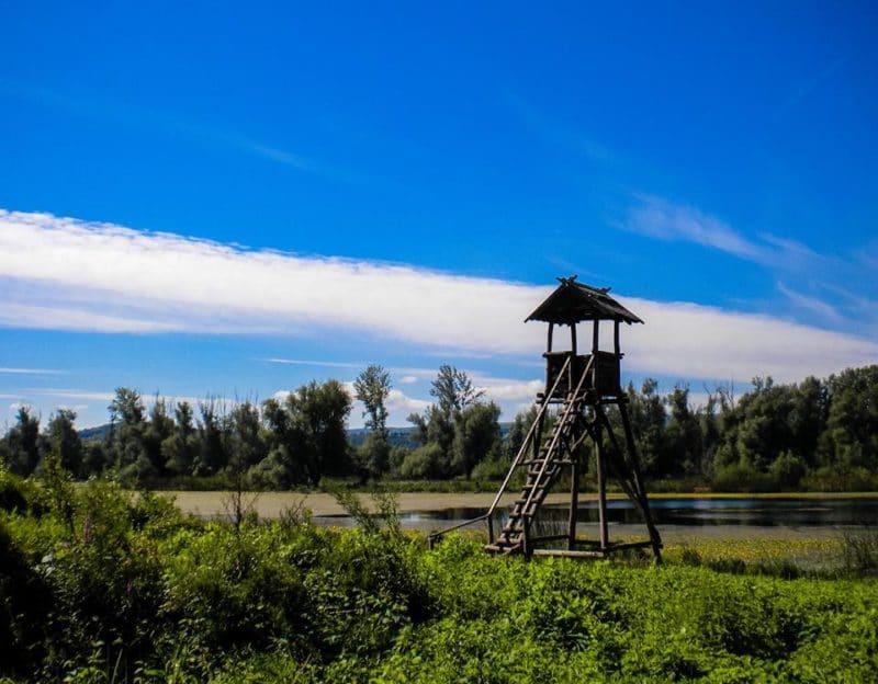 Kovilj-Petrovaradin Wetlands, Novi Sad