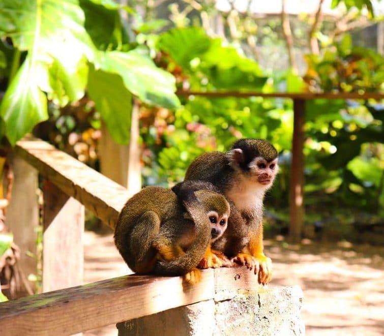 Monkeyland, Punta Cana