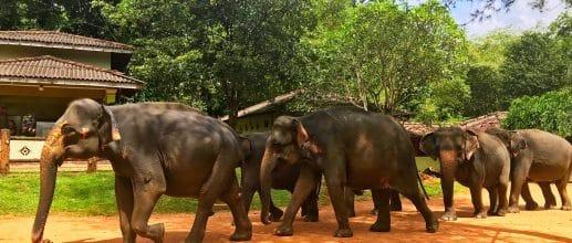 Envolez-vous pour le Sri Lanka fin 2019