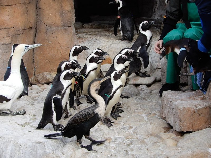 SANCCOB Penguin Rescue Station, Port Elizabeth