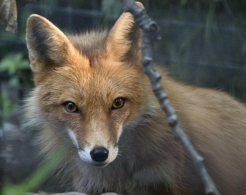 Zoo d'Alaska