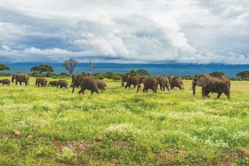 Parc national d'Amboseli, Loitoktok, Kenya