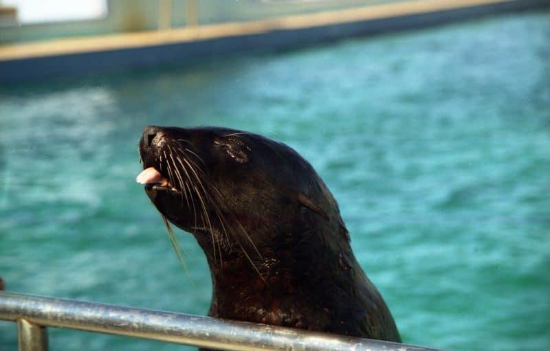 Bayworld Oceanarium, Port Elizabeth